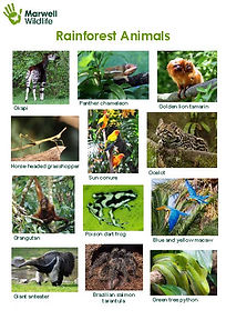 rainforest worksheets | rainforest animals worksheet