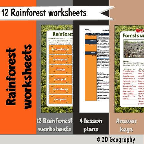 12 rainforest activities