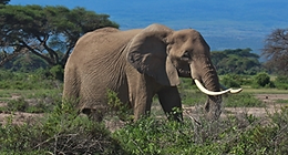 African animals | animal pictures | safari animals | big five animals