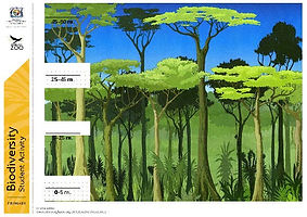 layers of the rainforest worksheet | rainforest worksheet