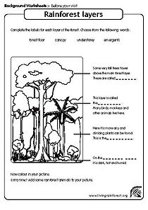rainforest worksheet for kids | layers of the rainforest worksheet