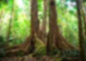rainforest diorama project