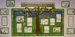 class displays rainforest 9