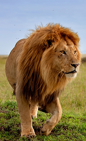 African animals | KS2 Geography | Geography of Kenya | animal pictures