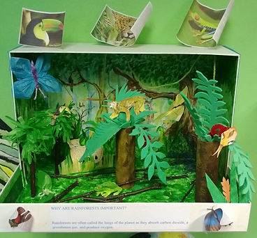 geography model - rainforest