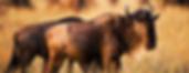 African animals   animal pictures   safari animals