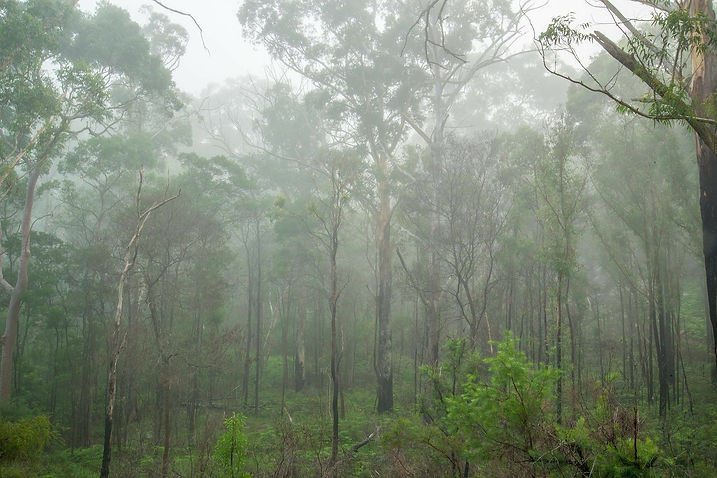 rain in the rainforest | images of the rainforest