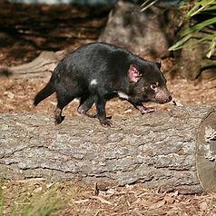 australia animals for kids