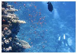 ocean project for school