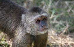 Baby monkey - too cute!!
