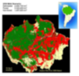 deforestation in the Amazon basin
