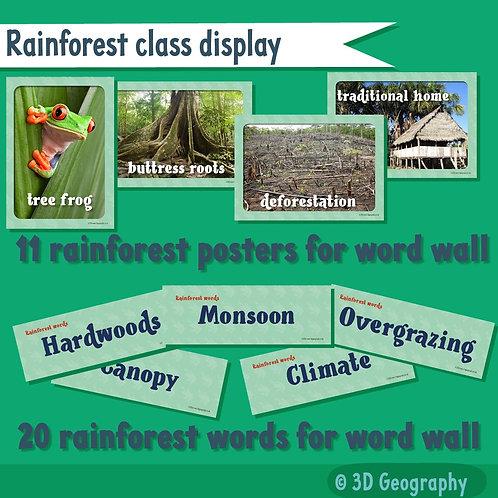 Rainforest class display