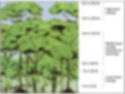 rainforest canopy diagram