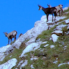 all about animals in the mountain environment