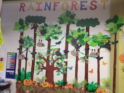 class displays rainforest 15