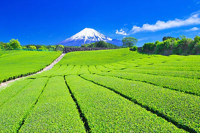 Facts about japan for kids   japan information   about japan   japan facts   fun facts about japan