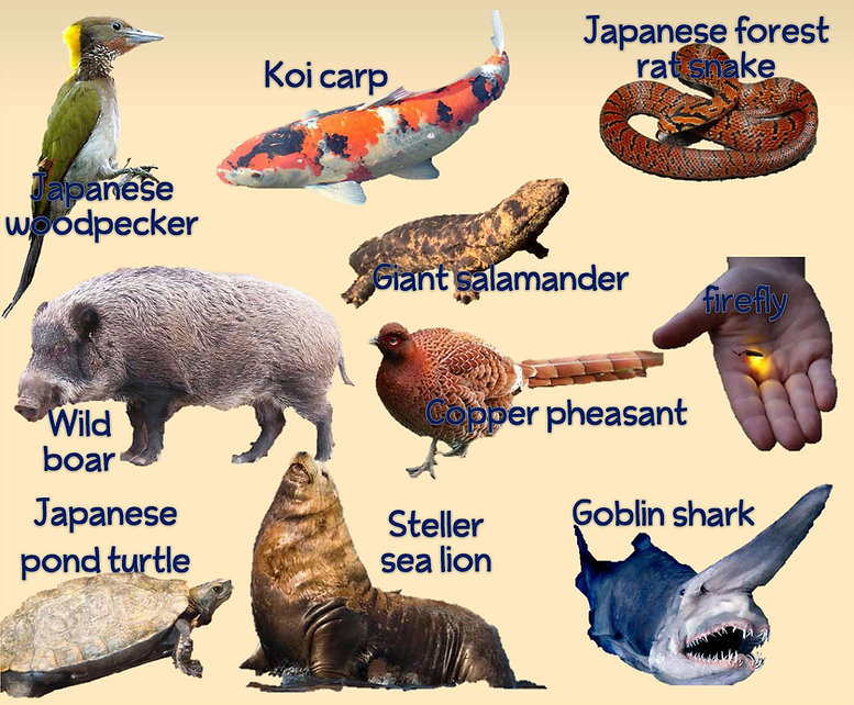 japan animals image