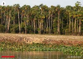 rainforest photo pack
