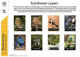 rainforest worksheets