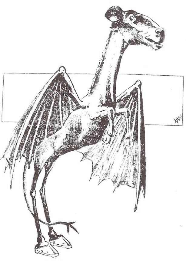 A drawing of the Jersey Devil. Horse head, kangaroo body, bat wings, cloven hooves, forked tail