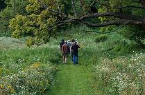 trails and tree limbs julie r.jpg