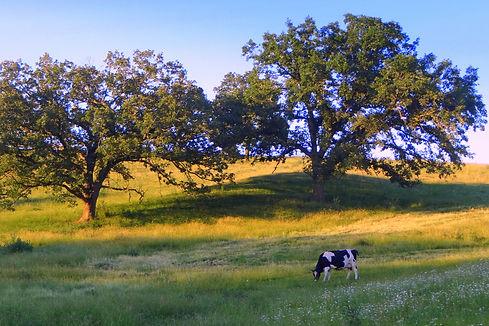 oak savanna