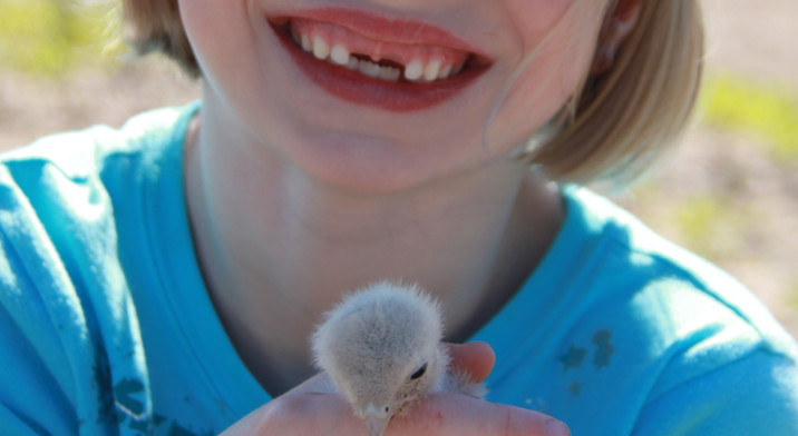 brylea 6 k chick.JPG