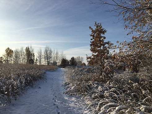 Winter trail Any Alstad.jpg