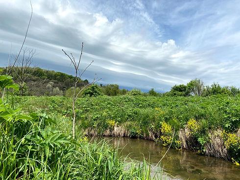 Stream habitat Amy Alstad.jpg