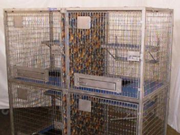 Cat Caging.jpg