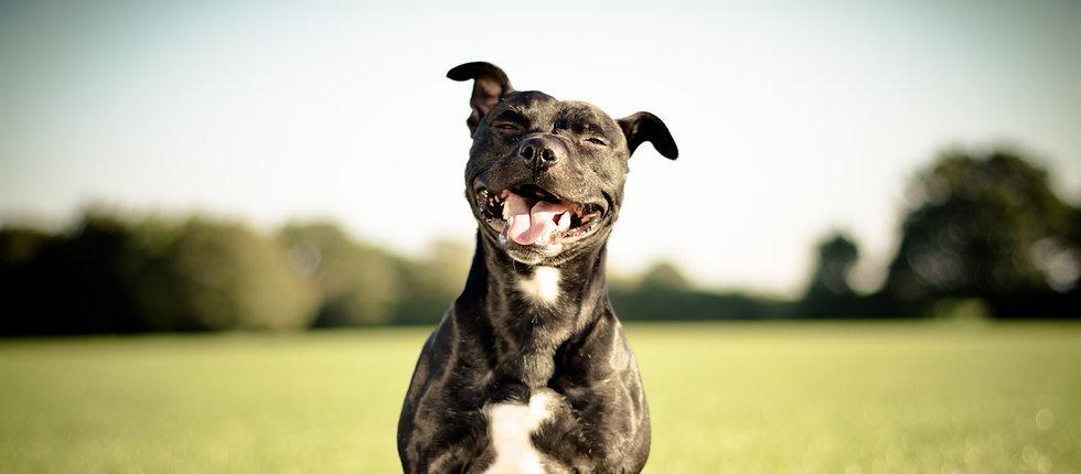 Happy Shelter dog_edited_edited_edited.jpg