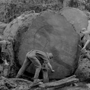 George Murray and sons jacking a log, Kauaeranga 1922