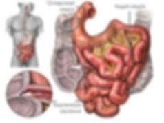 Баугиниева заслонка, илеоцекальный клапан,