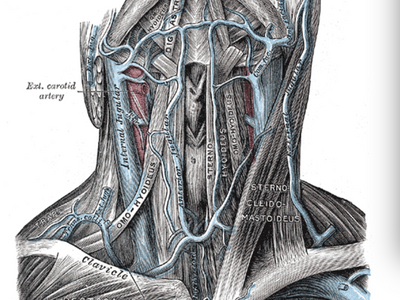 Причиной головной боли является венозный застой из-за сдавления внутренних яремных вен грудинноключи