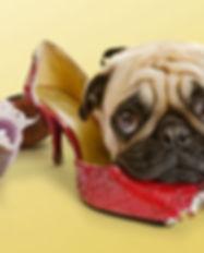 dog-chewing-shoe.jpg