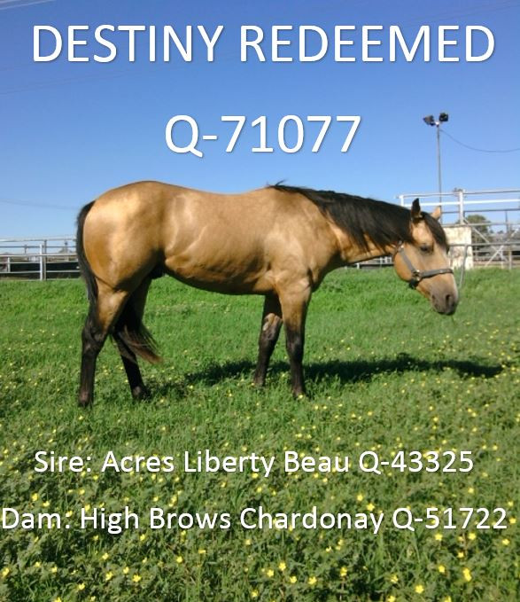 DESTINY REDEEMED Q-71077.jpg