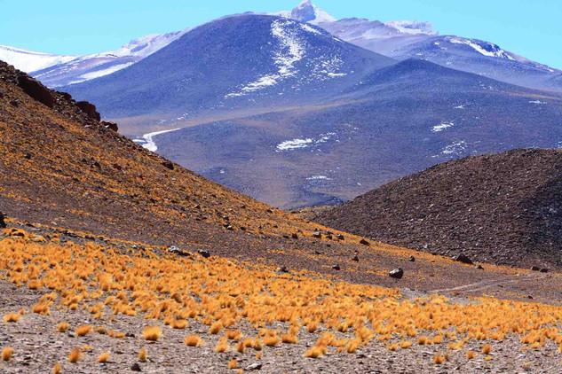 Atacama, 2014