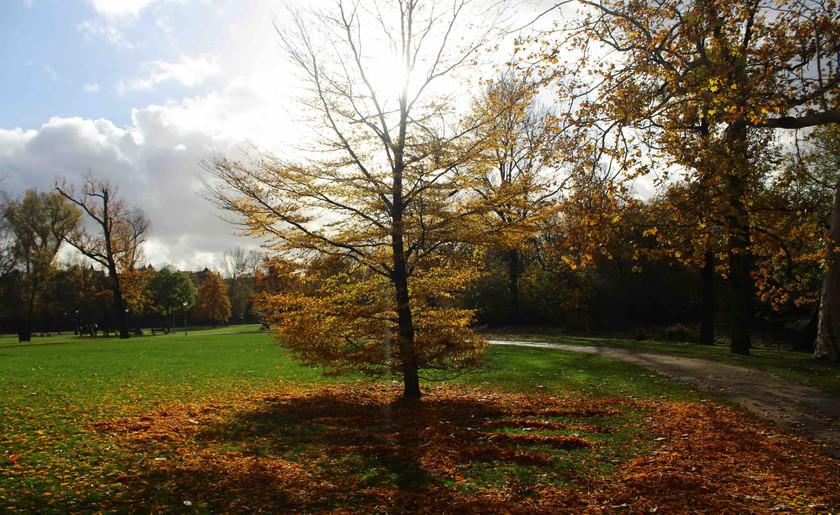 Solar Tree III