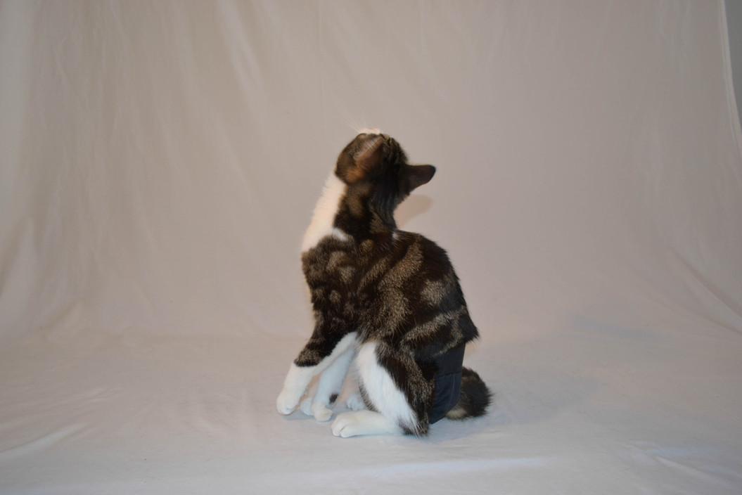 modèle-felin-fefille-couche-culotte-yamacouche