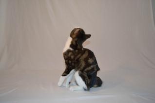 modèle-felin-fefille-chaleur-couche-culotte-yamacouche