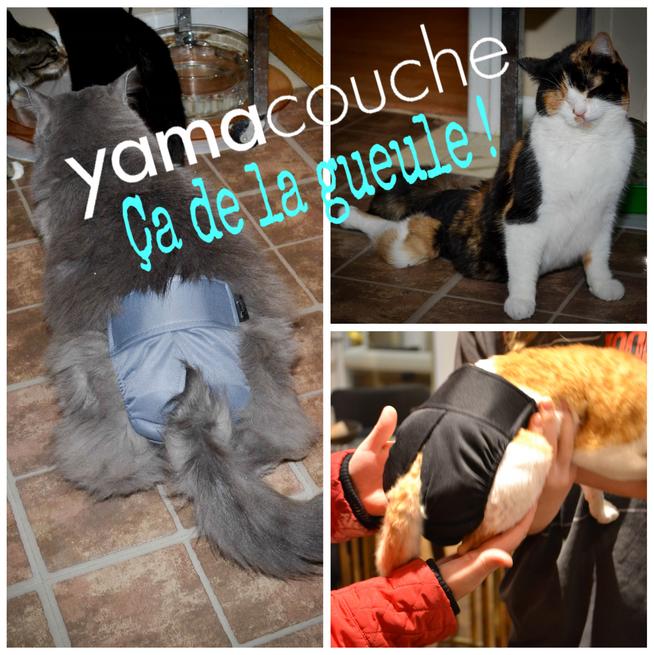 les-chats-yamacouche