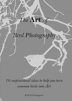 Art of Birds Coverpage.jpg