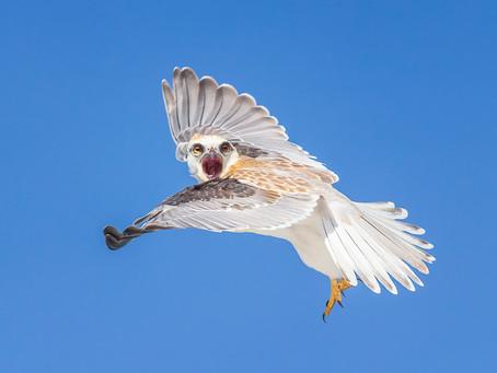 Top Twelve Bad Behaviours of Bird Photographers
