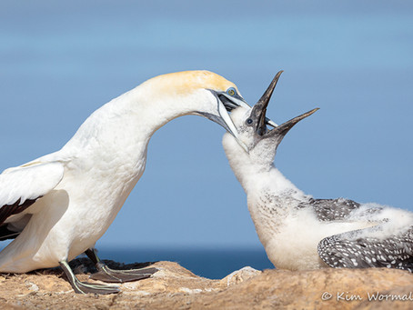 Ethical Bird Photography -   by Kim Wormald
