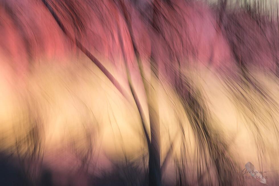 Casuarina Blur
