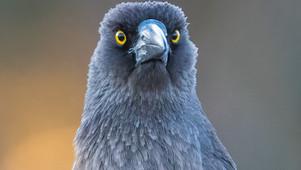 Bird Photography: Camera Essentials