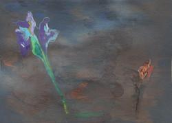 Fragile Iris-14,8x21cm-Papier