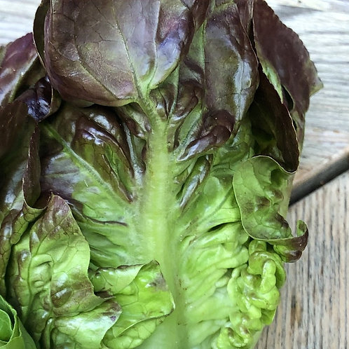 """Lettuce, one head """"normal size""""(butter, red or green)"""