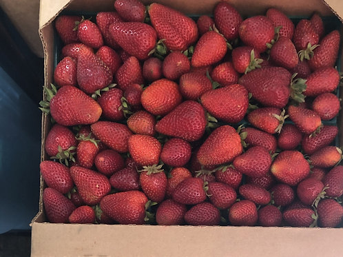 Fresh strawberries: Half Flat (6 pints) of delicious organic berries