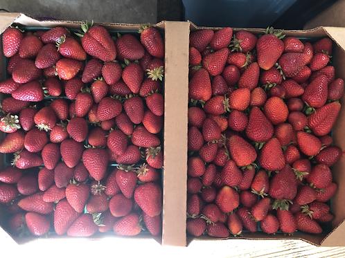 Fresh strawberries: 1 Flat (12 pints) of delicious organic berries